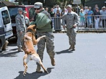 Staff Sgt. Thomas Honeycutt, military working dog handler with the 100th Military Working Dog Detachment, 709th Military Police Battalion, 18th MP Brigade, 21st Theater Sustainment Command, gives a bite demonstration to participants of the 2014 Rheinland-Pfalz Tag July 19 in Neuwied, Germany.