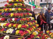 Courtesy photoA primrose pyramid can be found at the spring market in the Kaiserslatuern's city center at the annual event, Lautern bursts into bloom.