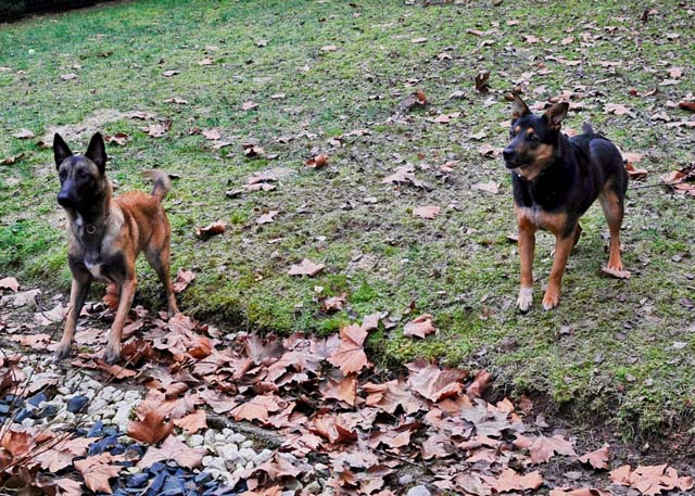 Rhea and Keira play fetch during a play date.