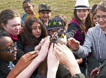 Sixth-grade students from Ramstein Middle School pet a peregrine falcon as a part of a Falconer Show presented for Earth Day, April 16th, 2015, at Ramstein Air Base, Germany. A hood was placed over the falcon's head so that it would not be frightened by the crowd and attempt to fly off. (U.S. Air Force photo/Airman 1st Class Tryphena Mayhugh)