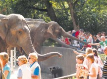Courtesy photo of Hagenbeck  Visitors admire the elephants at Tierpark Hagenbeck.