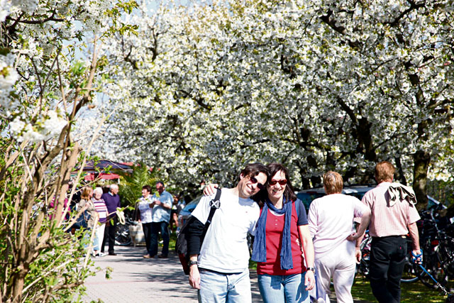 Courtesy photos Visitors of the blossom fest enjoy a hike along the blooming trees Saturday and Sunday in Freinsheim along the German Wine Street.