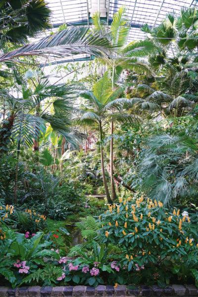 Palmengarten  Frankfurt —  Botanical oasis in a metropolis
