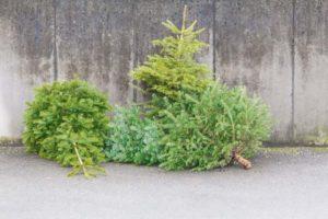 Christmas tree collection 2020