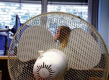 As summer temperatures heat up offices on American installations in Germany, commanders and supervisors should pay close attention to employees in Host Nation buildings without air conditioning. Photo by Keith Pannell