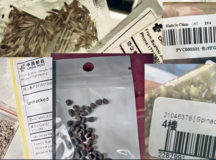 Handling of unsolicited seed packets from China