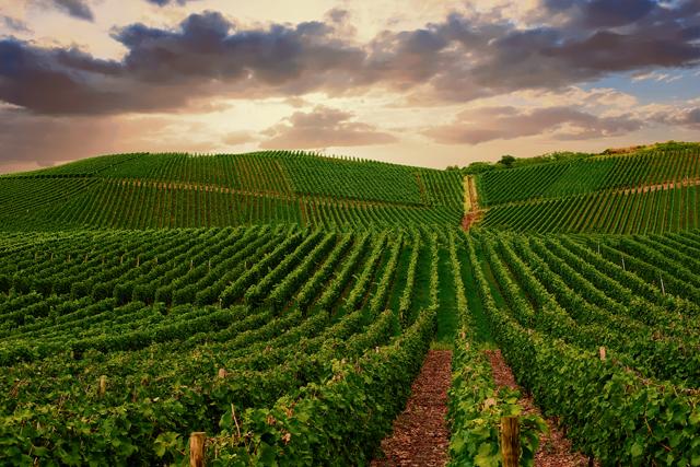 The vineyard next door: Germany's excellent wine regions