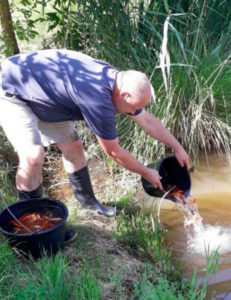 Garrison rescues thousands of goldfish found living at military wash rack